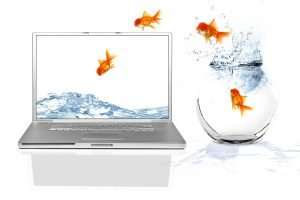 Fish out of water into laptop